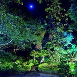 El_Jardxn_de_noche